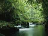 A Woodland Stream Winding Through a Burmese Jungle