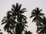A Contrasty View of Silhouetted Palm Trees
