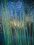 Grass Stems Set against the Rippled Surface of a Pond