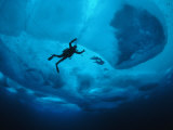 Diver Tethered against Currents Inspects Multi-Year Ice Floe