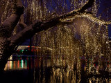 Christmas at Tivoli Where Holiday Lights Brighten the Long Winter Night