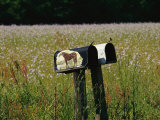 A Pair of Mailboxes Set on the Edge of a Field of Wildflowers