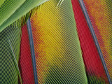 Extreme Close up of Bright Bird Feathers