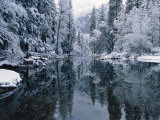 Snow-Covered Trees Reflected on the Surface of the Merced River