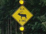Worlds First Elk-Activated Crosswalk Sign in Sequim  Washington