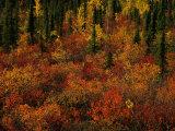Autumn Foliage Along the Mckenzie River