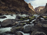 Colorado River Flows over a Rocky Streambed