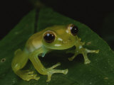A Close View of a Cute Little Green Frog