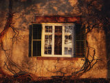 Bare Vines Twine Around a Window Bathed in Golden Light