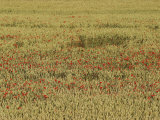 View of a Field Full of Wildflowers