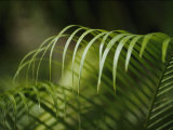 Close View of the Curling Palm Fronds