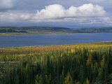 Autumn Foliage Surrounds Campbell Lake Near Inuvik