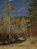 Autumn Foliage  Targhee National Forest  Palisades  Idaho