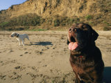 Two Dogs Take a Breather on the Beach