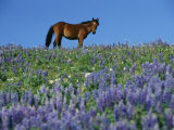 A View of a Wild Horse in a Field of Wildflowers