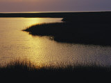 Twilight on a Marsh with Aquatic Grasses