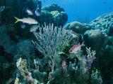 Reef Scene on Bonaire Island