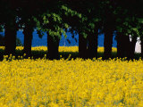 Spectacular Fields of Yellow Wildflowers