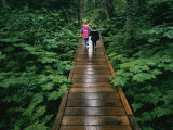 Two Children Walk Along a Wooden Walkway in the Rain