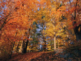 A Deciduous Forest Shows off its Fall Colors