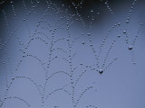 Detail of Spider Web Bejeweled with Crystal Drops of Dew