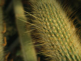 Close-up View of Needles on a Cactus