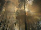 Sunlit Smoke Whispers the Firefighters Secret- Life Can Be Beautiful Even When the World Burns Down