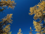View Looking Upwards at the Blue Sky Framed by Trees