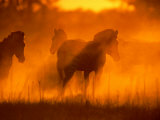 A Group of Zebras Stand in a Dust Cloud Colored Gold by the Low Sunlight