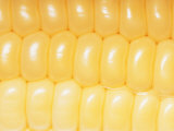 A Close View of Rows of Corn Kernels