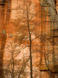 Solitary Tree in Front of Red Rock Canyon Walls at Oak Creek Canyon