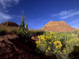 Desert Landscape with Rock Formations and Wildflowers