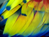 Close View of the Brightly Colored Feathers of a Tropical Bird