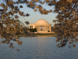 Cherry Trees in Bloom Around the Tidal Basin and Jefferson Memorial