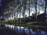 Elm Trees Lining Canal at Trebes  Thomas Jefferson's Journey in France