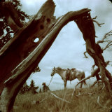 Rancher Leading Horse Across Field as Seen Through Branches of Fallen Tree  Trinchera Ranch
