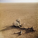 Skeleton of a Giraffe  Dead of Thirst  Ravaged by Hyenas and Vultures  Lying in Dried Lake Bed