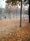 Lone Chair Sitting Amongst Fallen Leaves in Tuileries Gardens