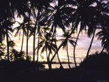 Coconut Trees Swaying in Lagoon of Atoll of Cocos Islands