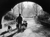 Dog Walker in Central Park