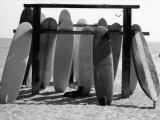 Dog Seeking Shade under Rack of Surfboards at San Onofre State Beach Papier Photo par Allan Grant
