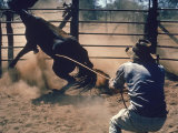 Australian Stockman on Homestead Breaking Untamed Horse