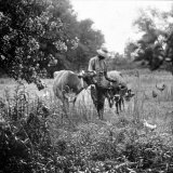 One of Albert Thornton&#39;s Sons with Cattle on Their Land Part of &quot;Background of Segregation&quot; Series