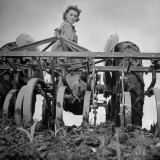 Patricia Colleen Altree Harrowing a Corn Field