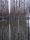 Flooded Forest Near Chalon Sur Saone  France