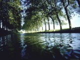 Elm Trees Line Languedoe Canal  Trebes  Southern France East of Toulouse