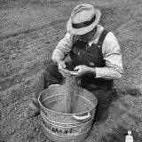 Farmer Straining Grain Through His Fingers