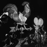 Screen Test For Pathe Newsreel Rooster