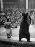 Dancing Bear at the Circus