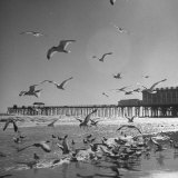 Large Group of Sea Gulls Flying Around and on the Beach